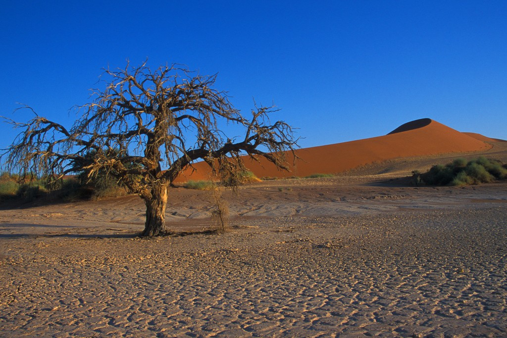 Sunrise at Sossusvlei, southern Namibia, 2002. Photo D.Mahr